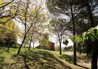 Louvet-Group-International-Real-Estate-Monte-Castello-di-Vibio-Italy-2